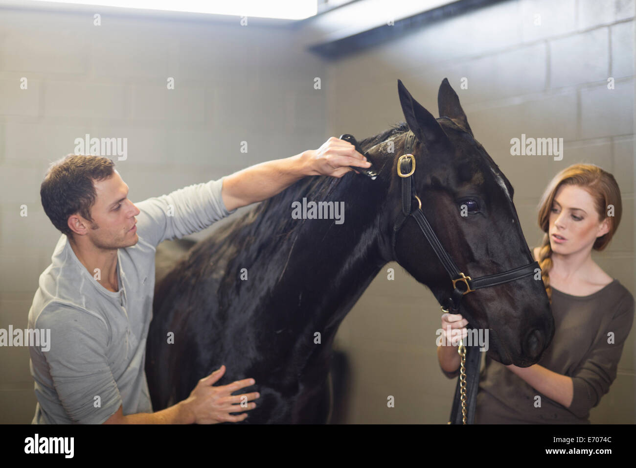 Stablehands grooming black horse in stables - Stock Image