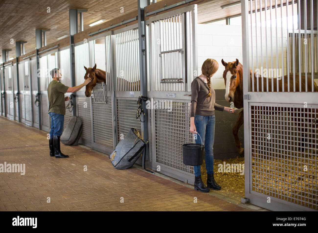 Stablehands feeding horses in stables - Stock Image