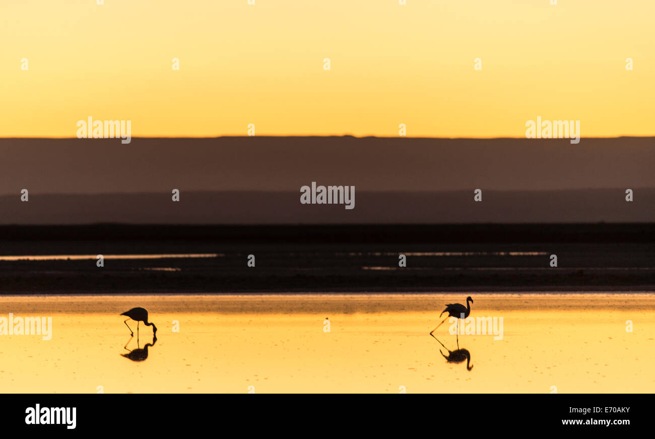 Flamingos in San Pedro de Atacama, Chile, South America - Stock Image