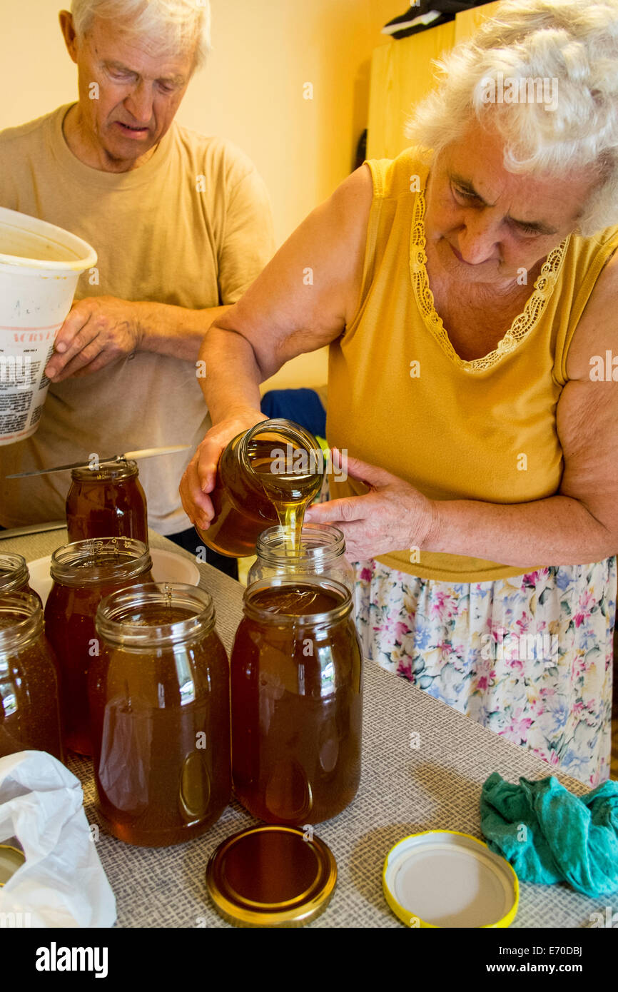 Family run apiary, Honey is being distributed into jars, Osiny, Poland - Stock Image