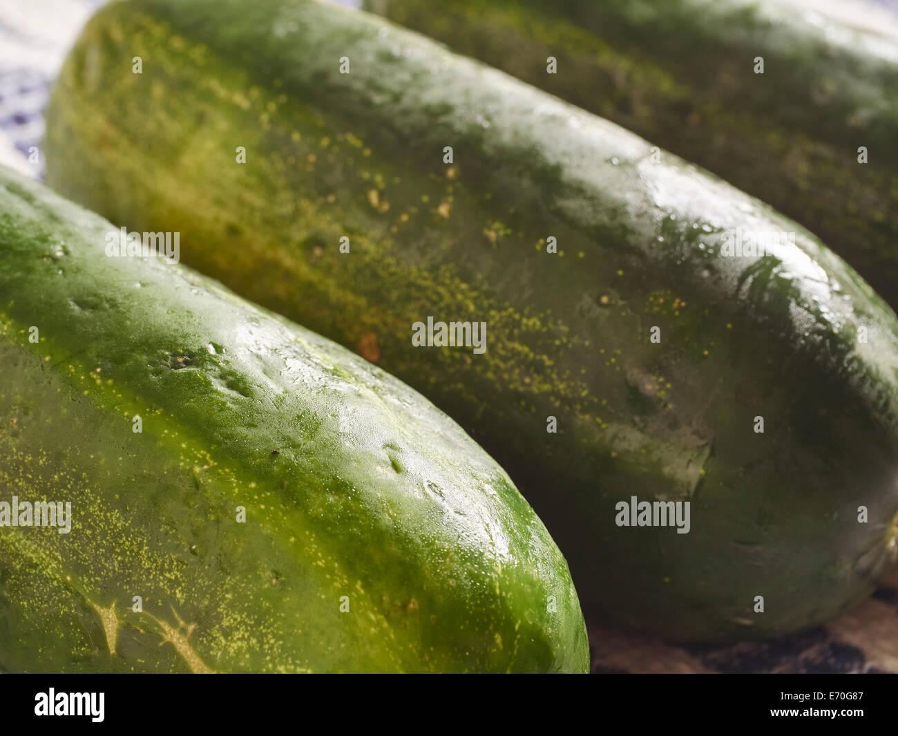 Kirby Cucumbers - Stock Image