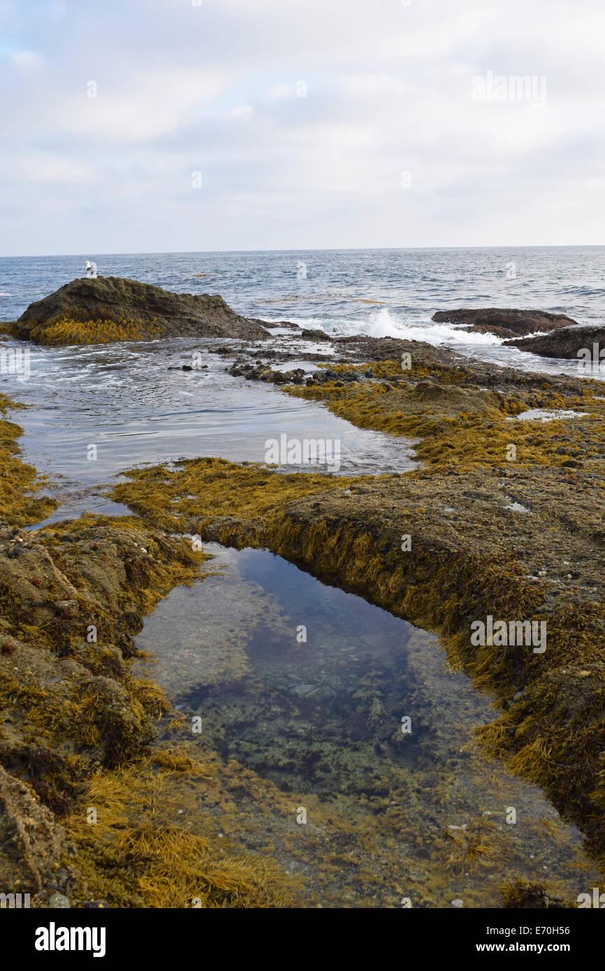Laguna Tide Pools Stock Photo