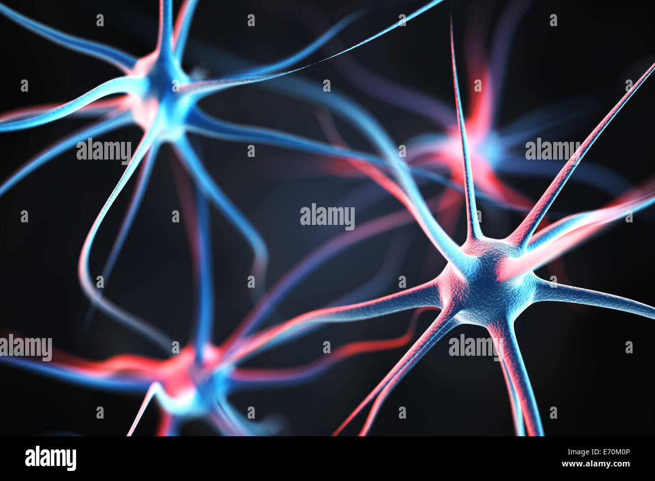 Neurons in the brain - Stock Image