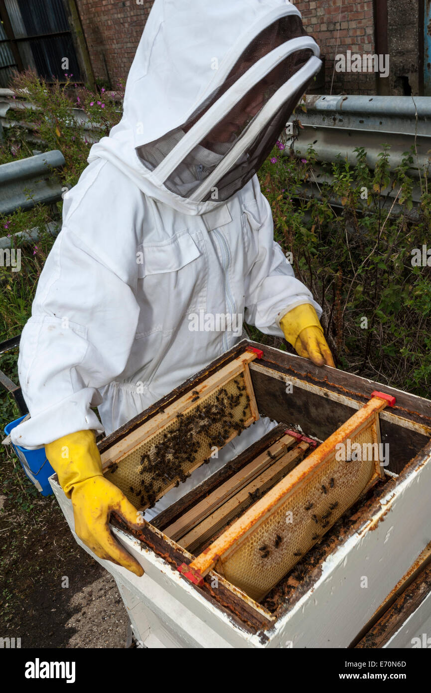 Replacing the super on the brood box - Stock Image