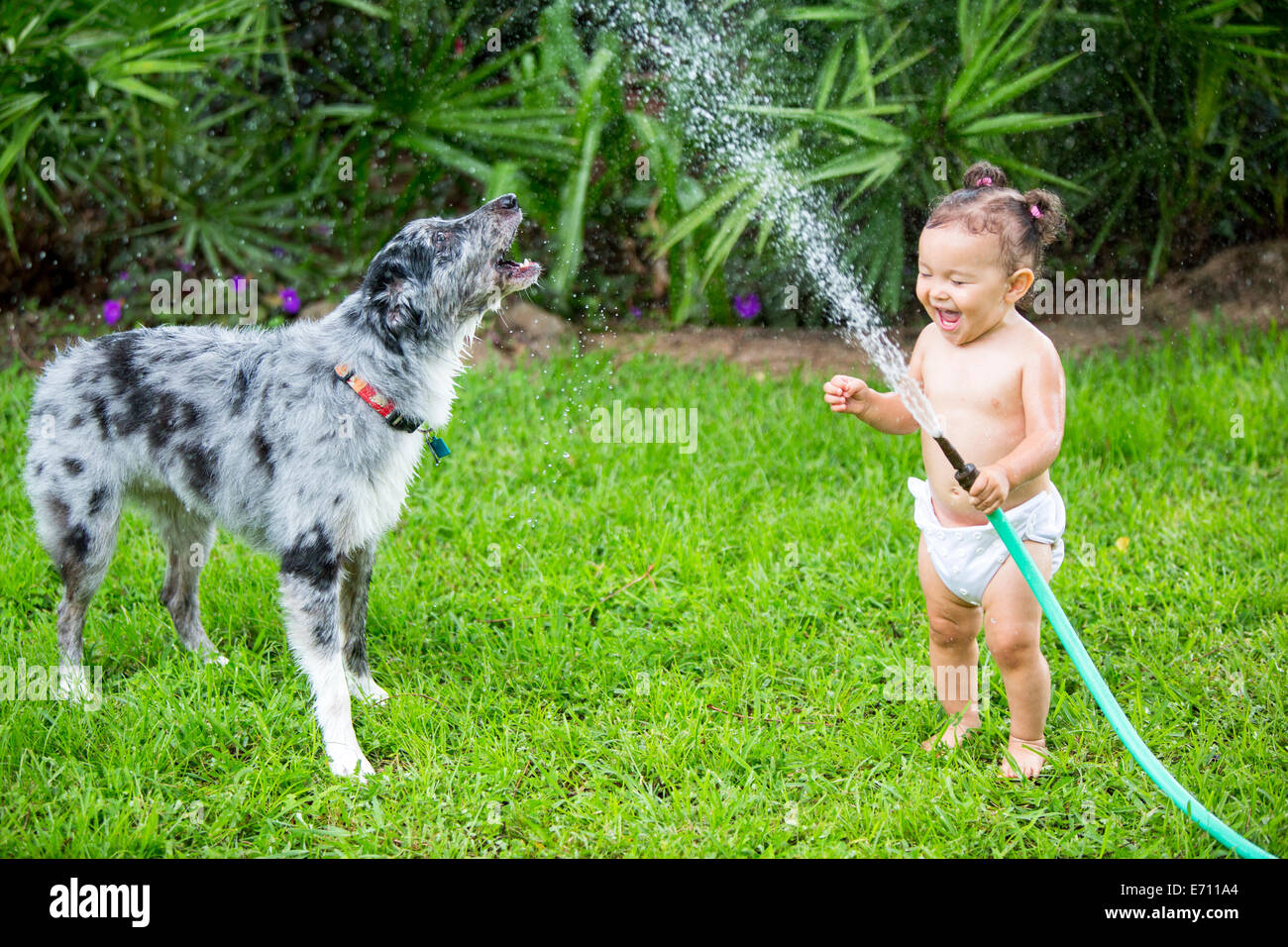 Toddler girl holding water hose, playing with dog - Stock Image
