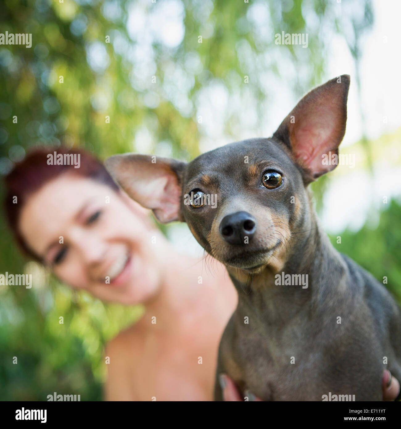 A woman with a small pet dog. Stock Photo