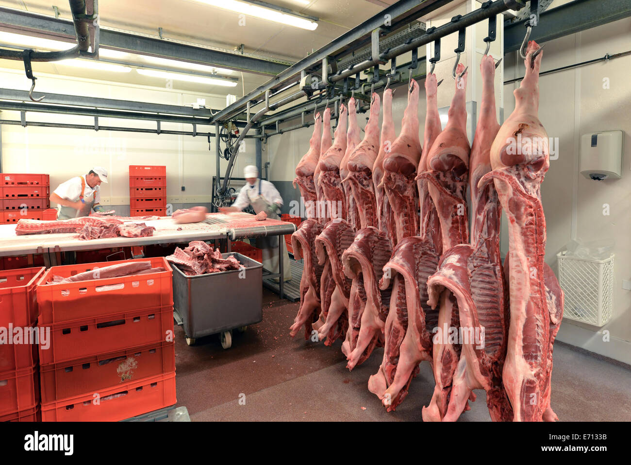 Sides of pork in cold storage of a slaughterhouse & Sides of pork in cold storage of a slaughterhouse Stock Photo ...