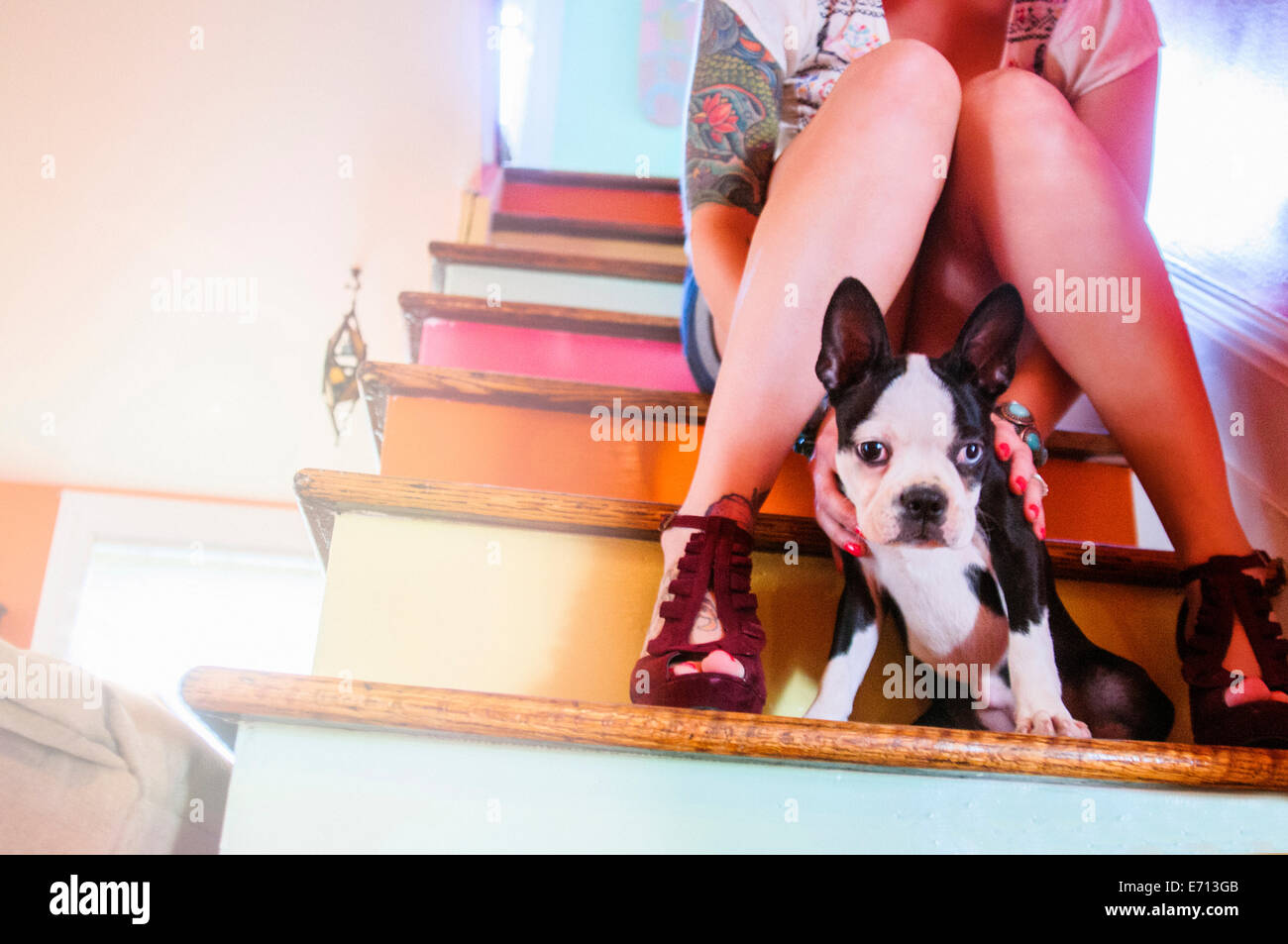 Cropped shot of young woman sitting on colorful staircase with dog - Stock Image
