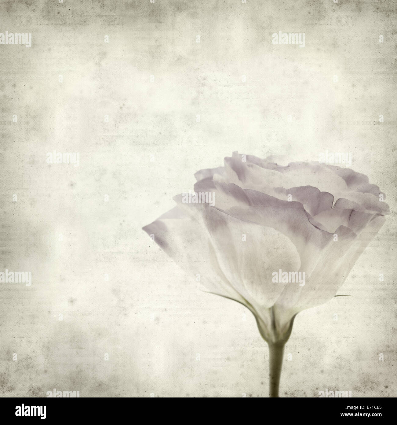 textured old paper background with double austome - Stock Image