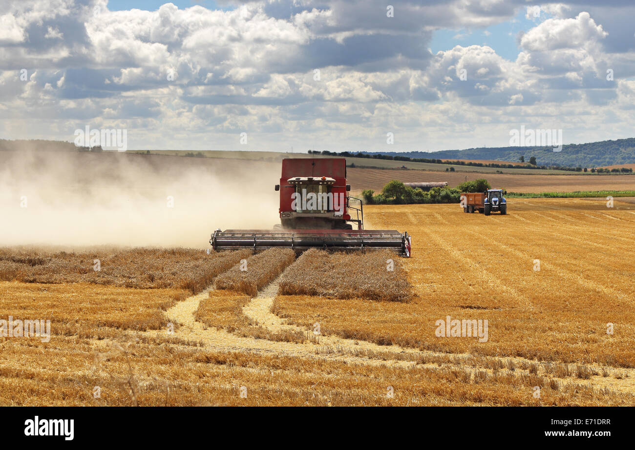An English Rural Landscape in the Chiltern Hills with fields of golden wheat and stubble with combine Harvester - Stock Image
