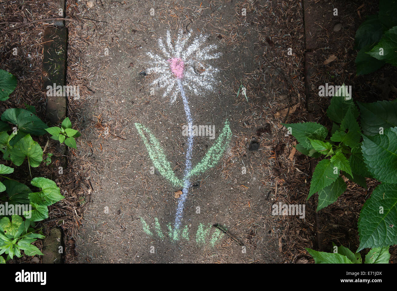 Whimsical chalk drawing on garden walkway - Stock Image