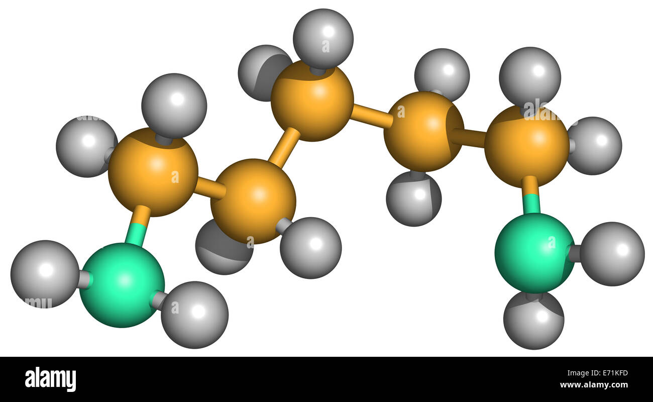 Cadaverine is a foul-smelling diamine compound produced by protein hydrolysis during putrefaction of animal tissue. - Stock Image