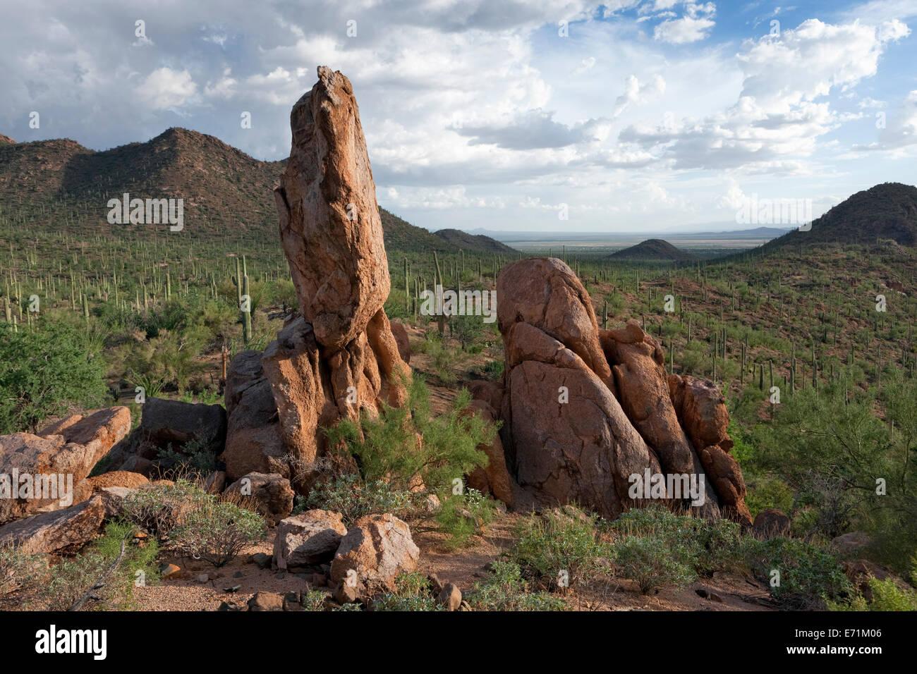 Rhyolite Monolith, Saguaro National Park, Arizona - Stock Image