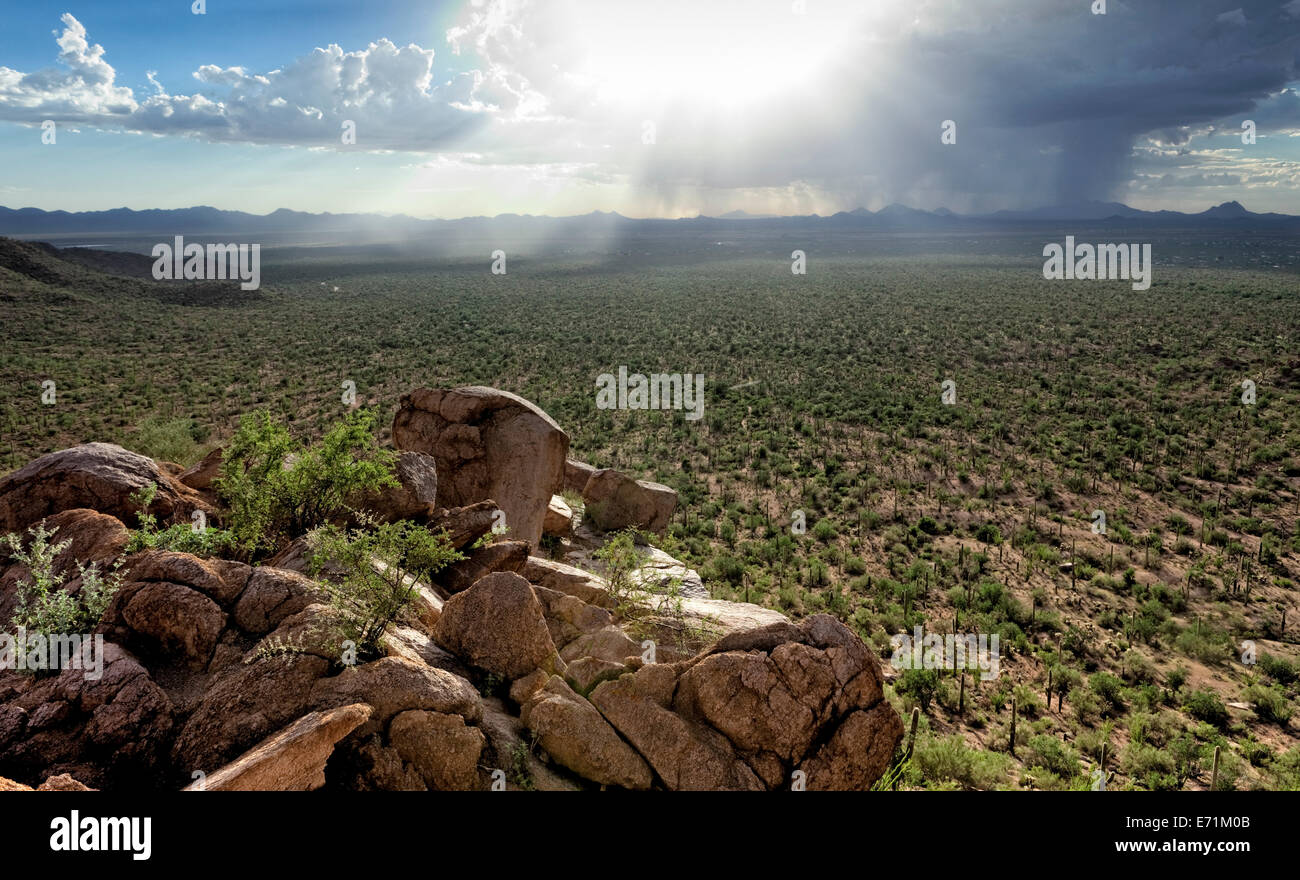 Rain Squall, Saguaro National Park, Arizona - Stock Image