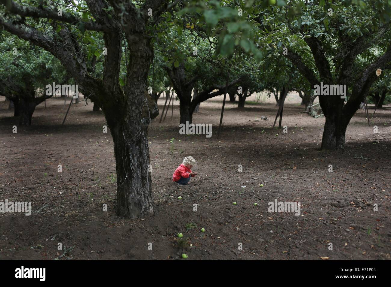 A small child squatting down to look at something in an orchard. - Stock Image