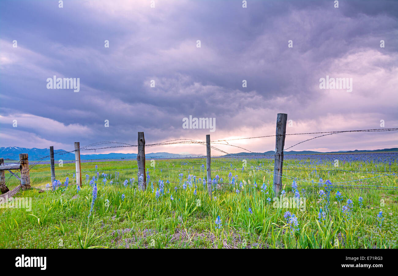 Barbed wire fence and dramatic morning sky - Stock Image