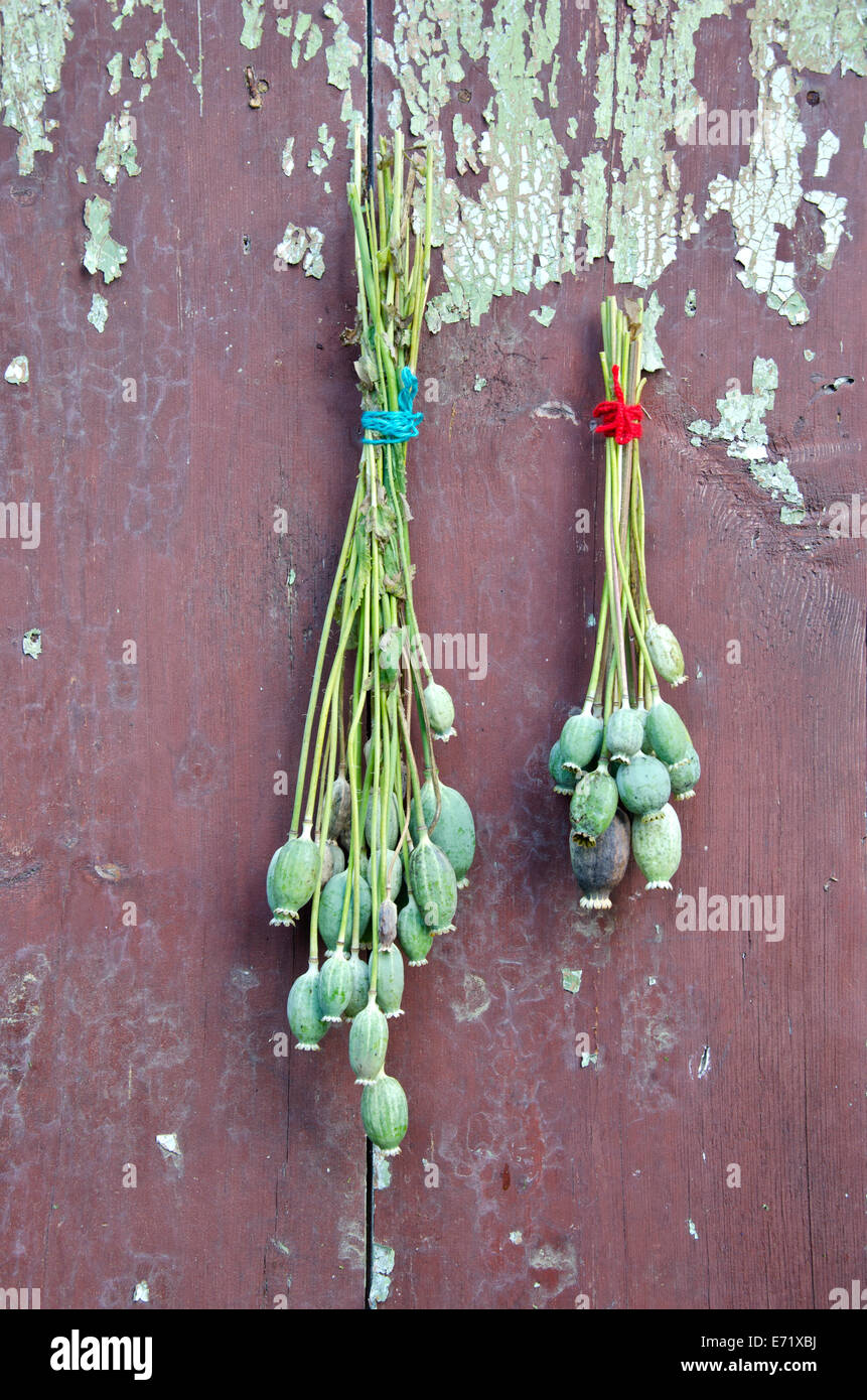 two bunch poppy head with seeds on old wooden farm wall - Stock Image