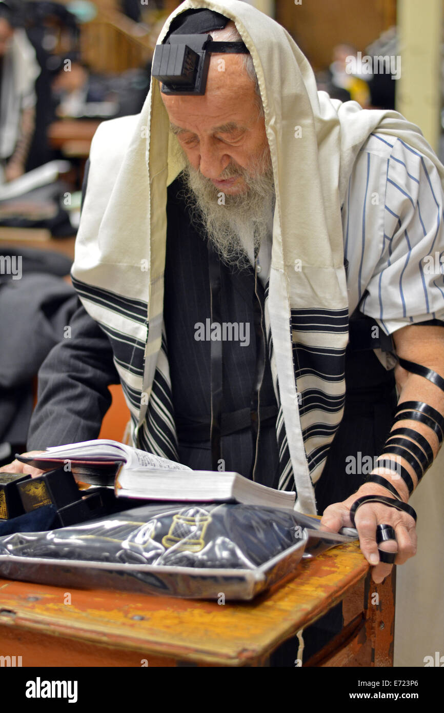 Religious Jewish man praying wearing Tefillin, phylacteries, and a prayer shawl at a synagogue in Brooklyn, New - Stock Image