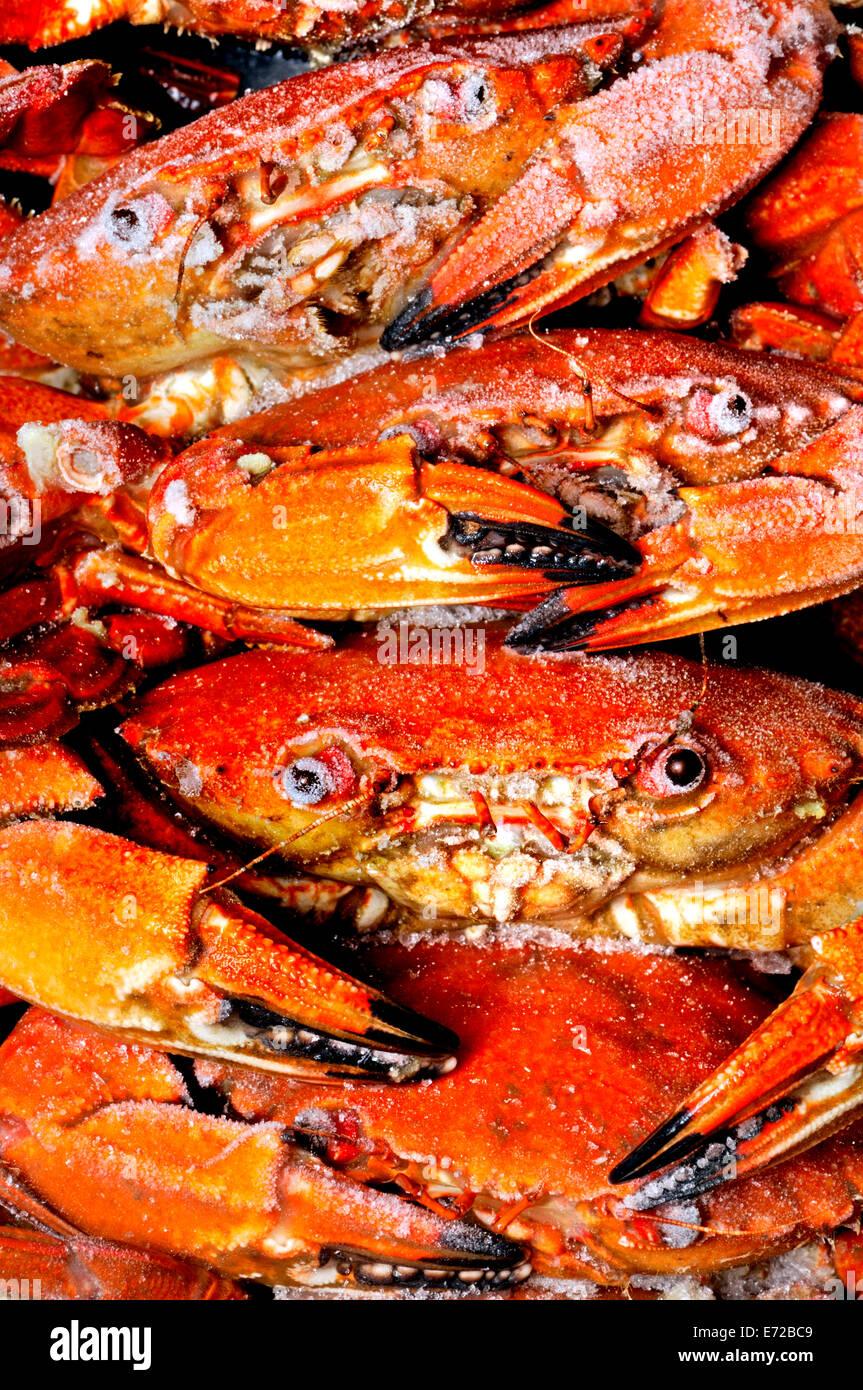 Frozen Crabs - Stock Image