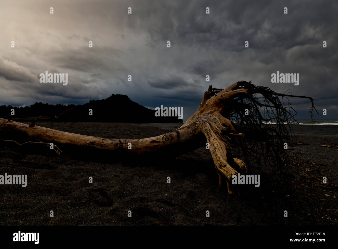 A tree trunk washed up on a beach near Port Orford, Oregon. - Stock Image