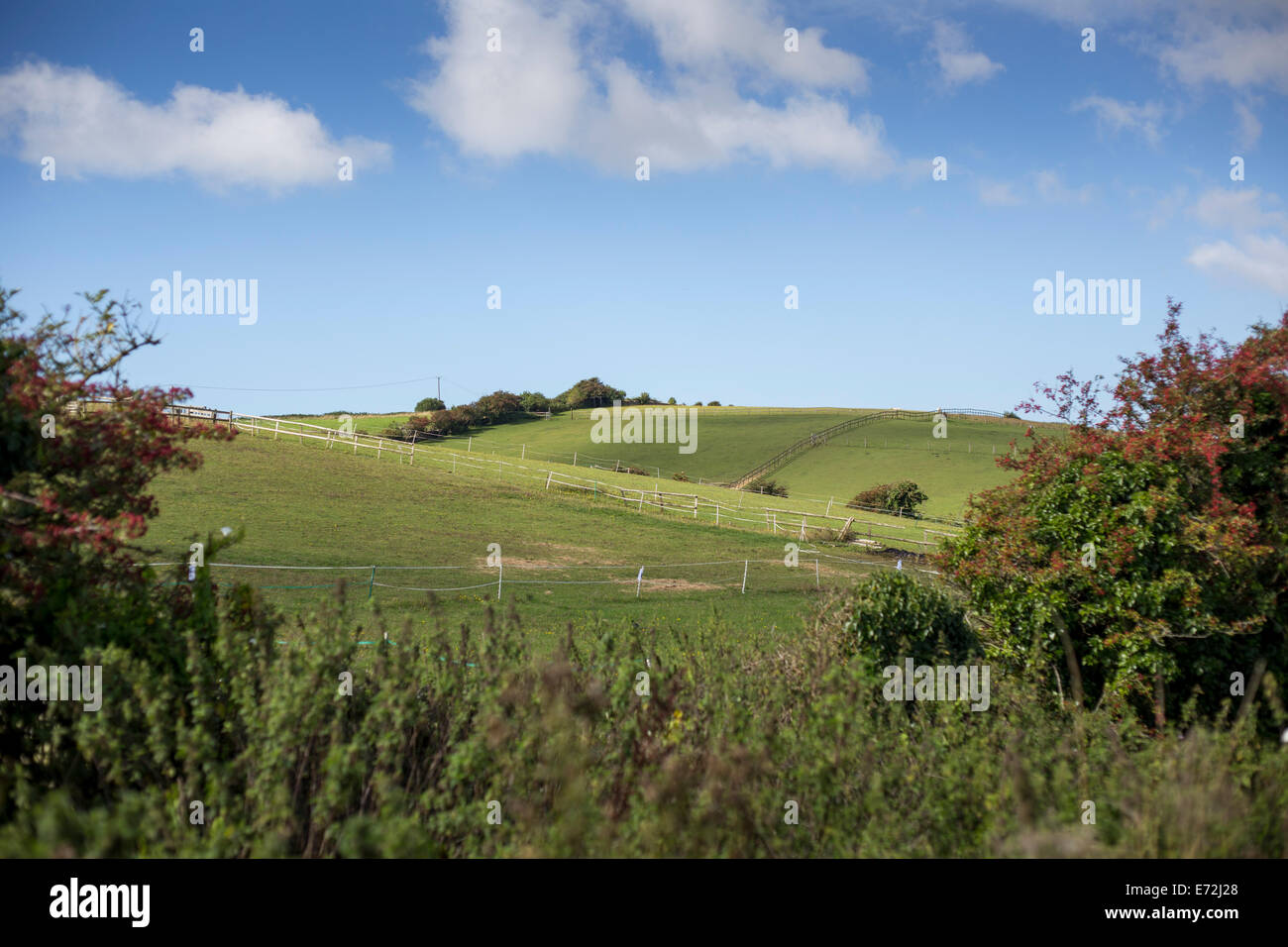 The rolling lush green countryside of Preston near Weymouth, Dorset UK Stock Photo
