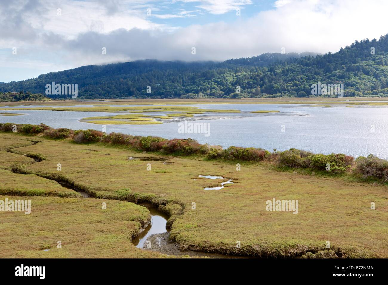 Wetland marshes in Point Reyes National Seashore, Marin County, California. - Stock Image