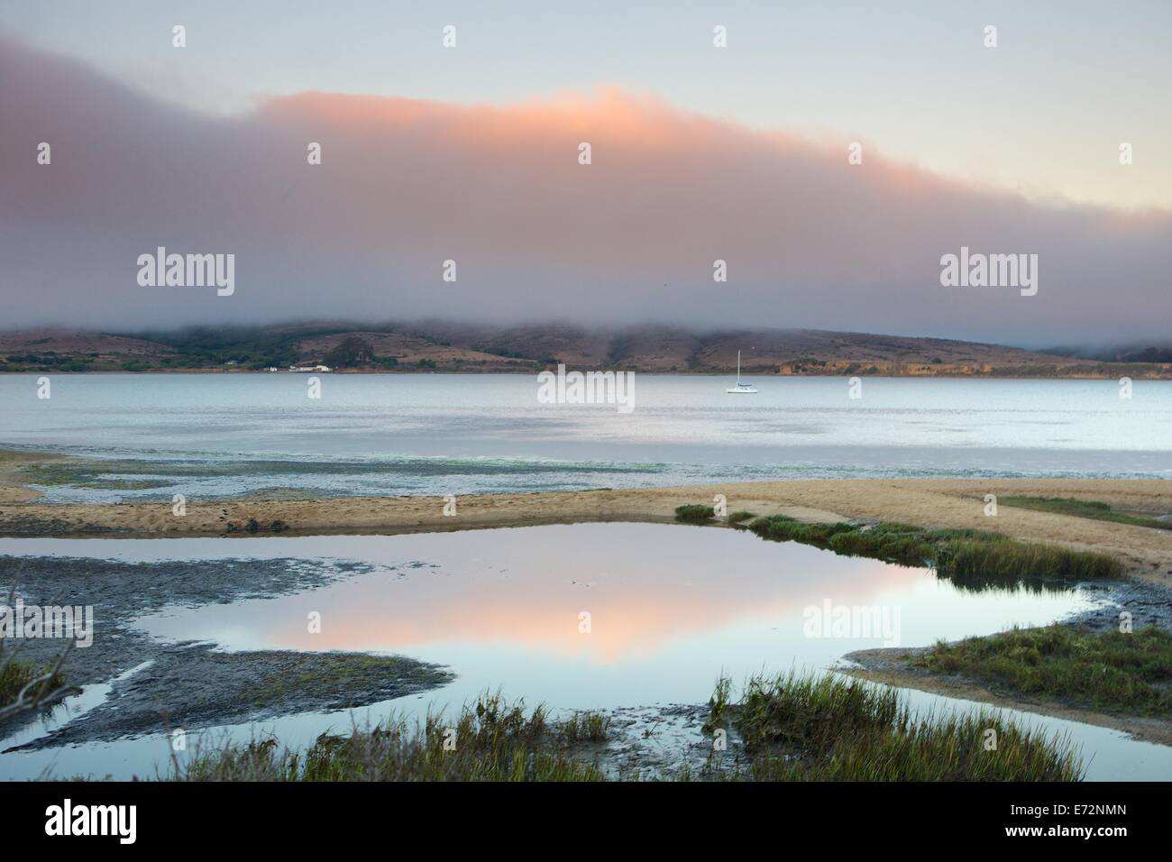 Wetland marshes in Tomales Bay in Point Reyes National Seashore, Marin County, California. - Stock Image