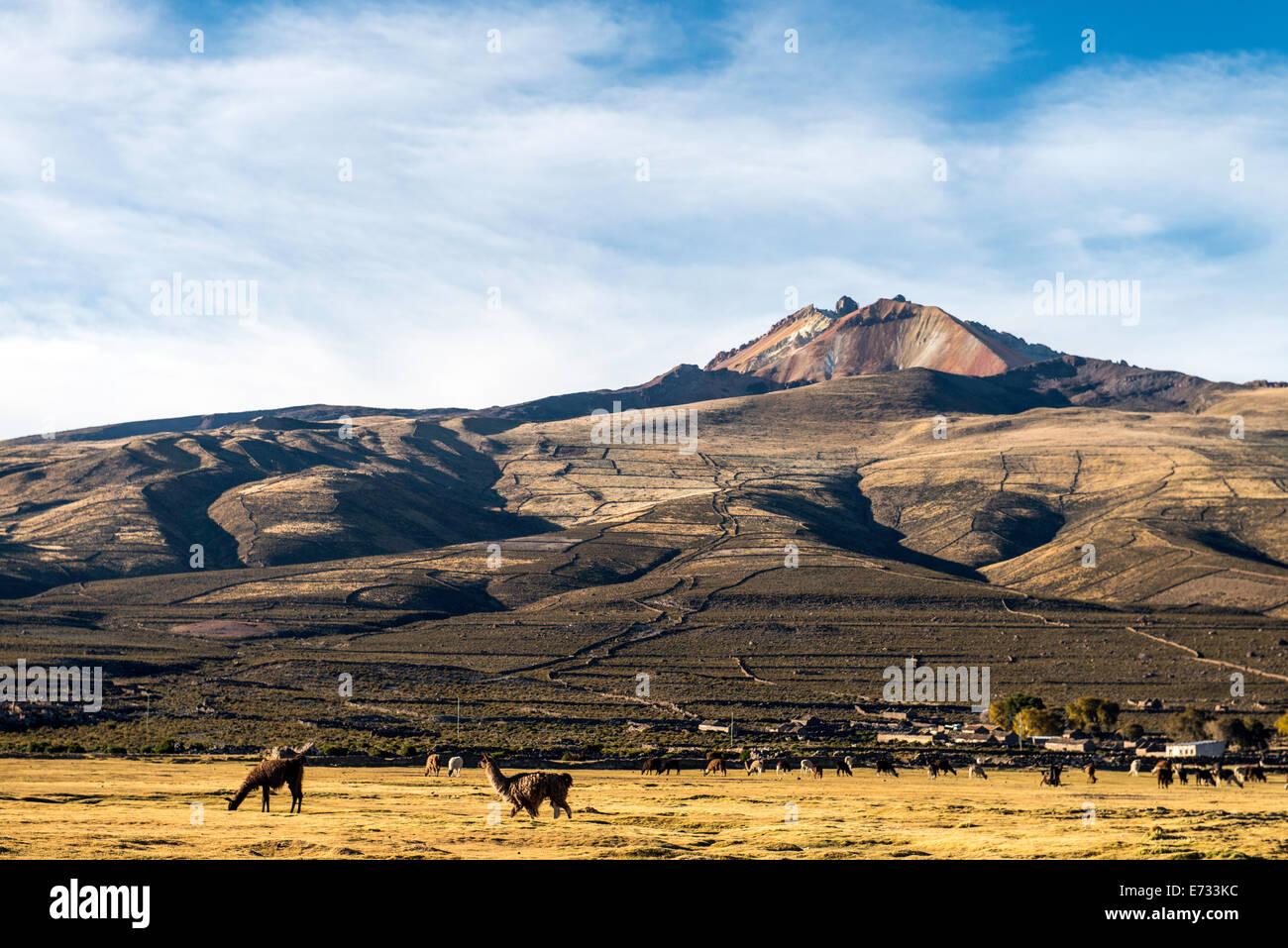 Volcano Tunupa and llamas in Potosi Bolivia, South America - Stock Image