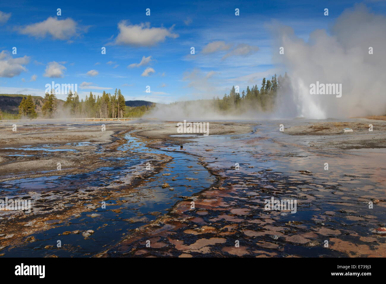 Daisy Geyser erupts at an angle, Upper Geyser Basin, Yellowstone National Park, UNESCO Site, Wyoming, USA - Stock Image