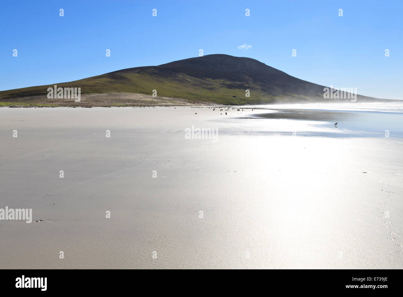 Glistening beach, tracks, sea spray and Mount Harston, the Neck, Saunders Island, Falkland Islands, South America - Stock Image