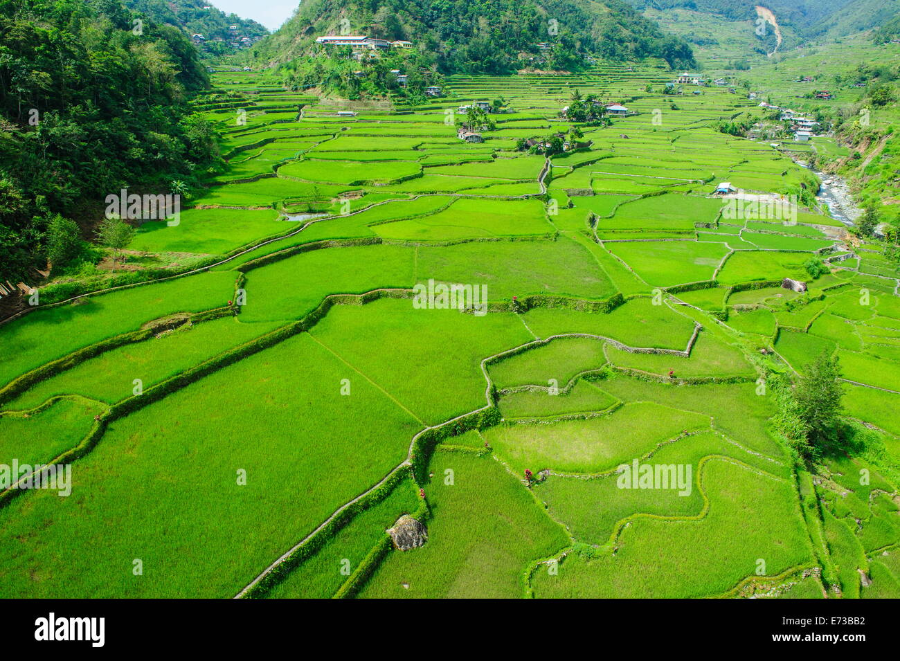 Hapao rice terraces, Banaue, UNESCO World Heritage Site, Luzon, Philippines, Southeast Asia, Asia - Stock Image