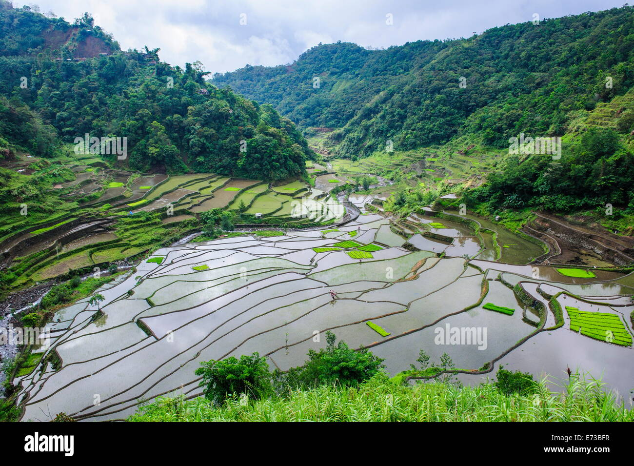 The rice terraces of Banaue, UNESCO World Heritage Site, Northern Luzon, Philippines, Southeast Asia, Asia - Stock Image