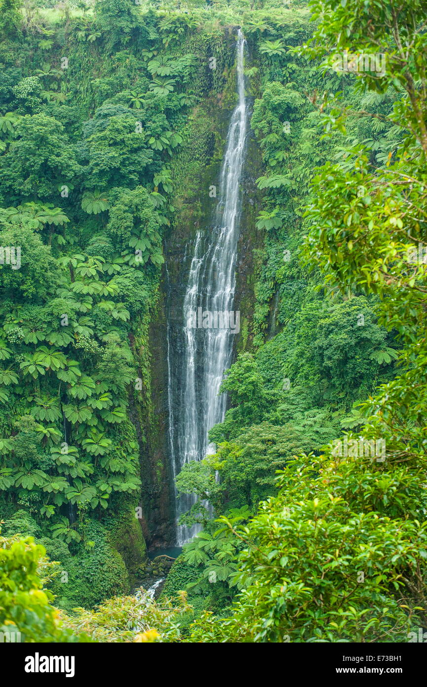 Papapapai-Tai Falls, Upolu, Samoa, South Pacific, Pacific - Stock Image