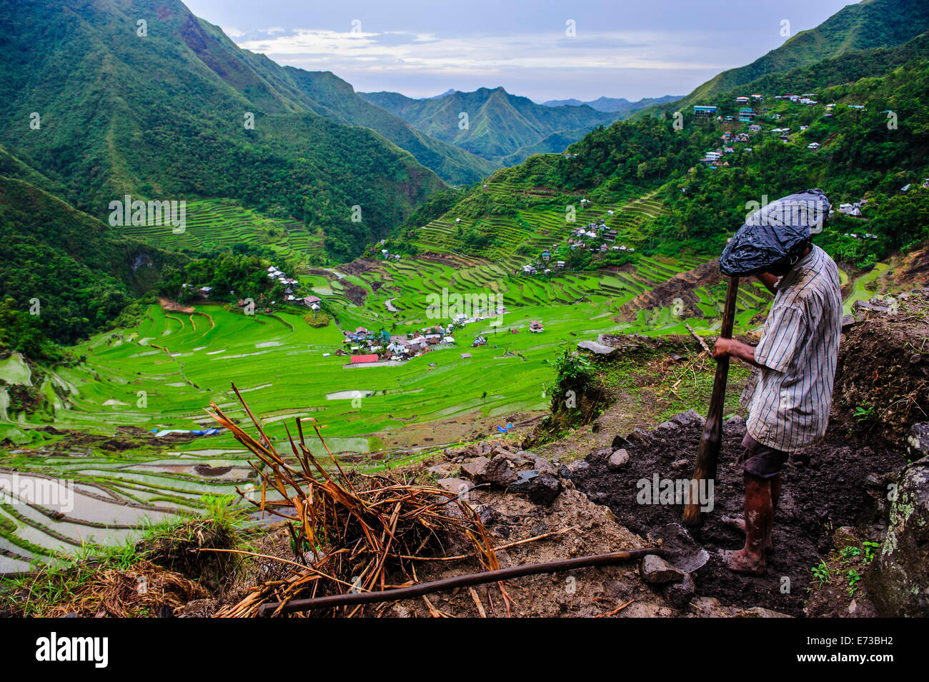 Man working in the Batad rice terraces, part of the UNESCO World Heritage Site of Banaue, Luzon, Philippines, Southeast - Stock Image