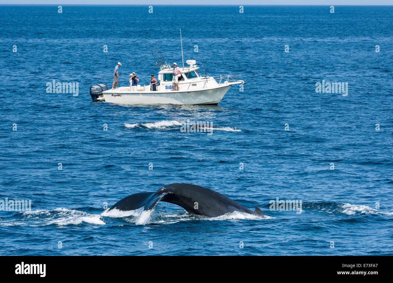 Stellwagen Bank Whale Watching - Stock Image