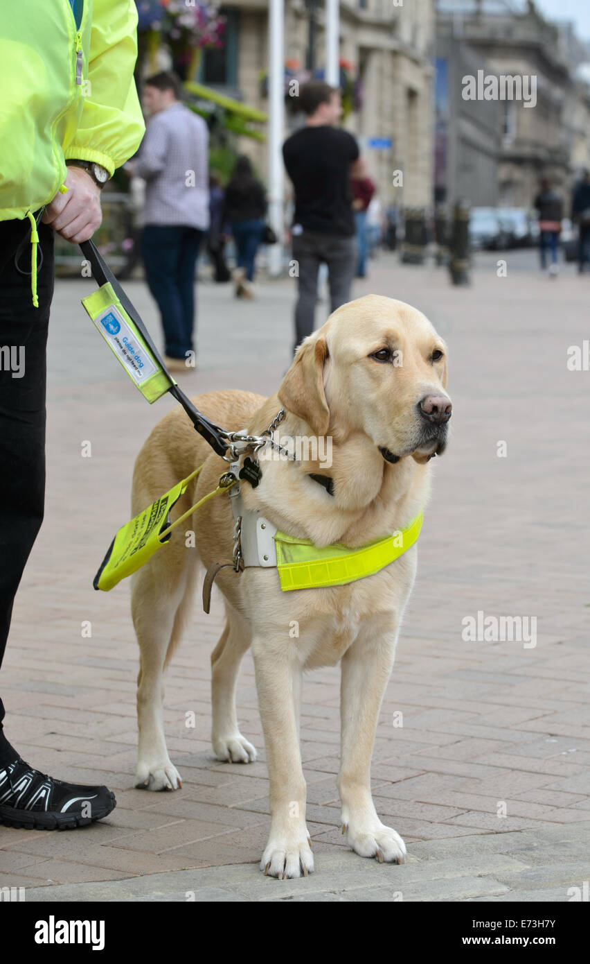Training a guide dog puppy? | Yahoo Answers