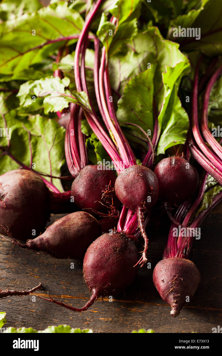 Raw Organic Red Beets Ready To Eat - Stock Image