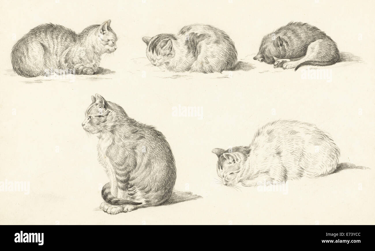 Five studies of cats - by Jean Bernard, 1775 - 1833 - Stock Image
