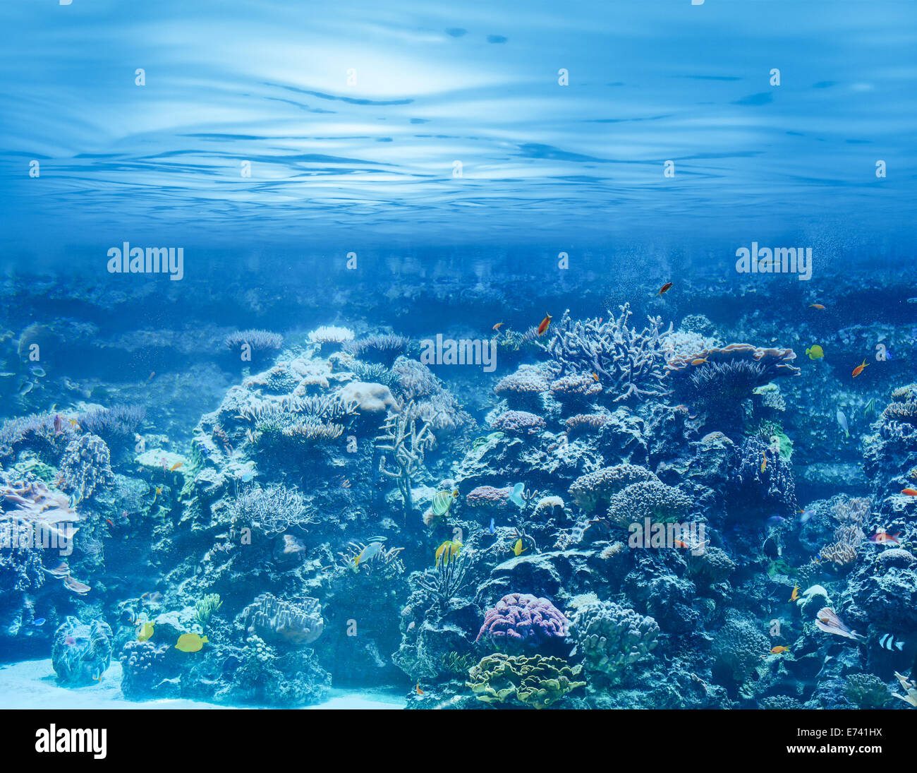 Sea or ocean underwater with coral reef and tropical fishes - Stock Image