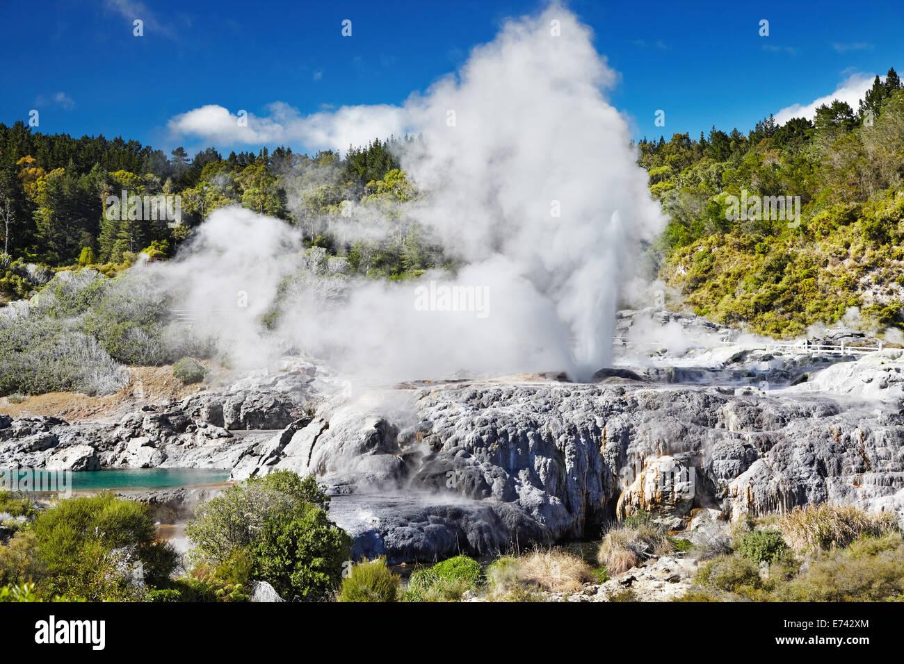 Pohutu Geyser, Whakarewarewa Thermal Valley, Rotorua, New Zealand - Stock Image