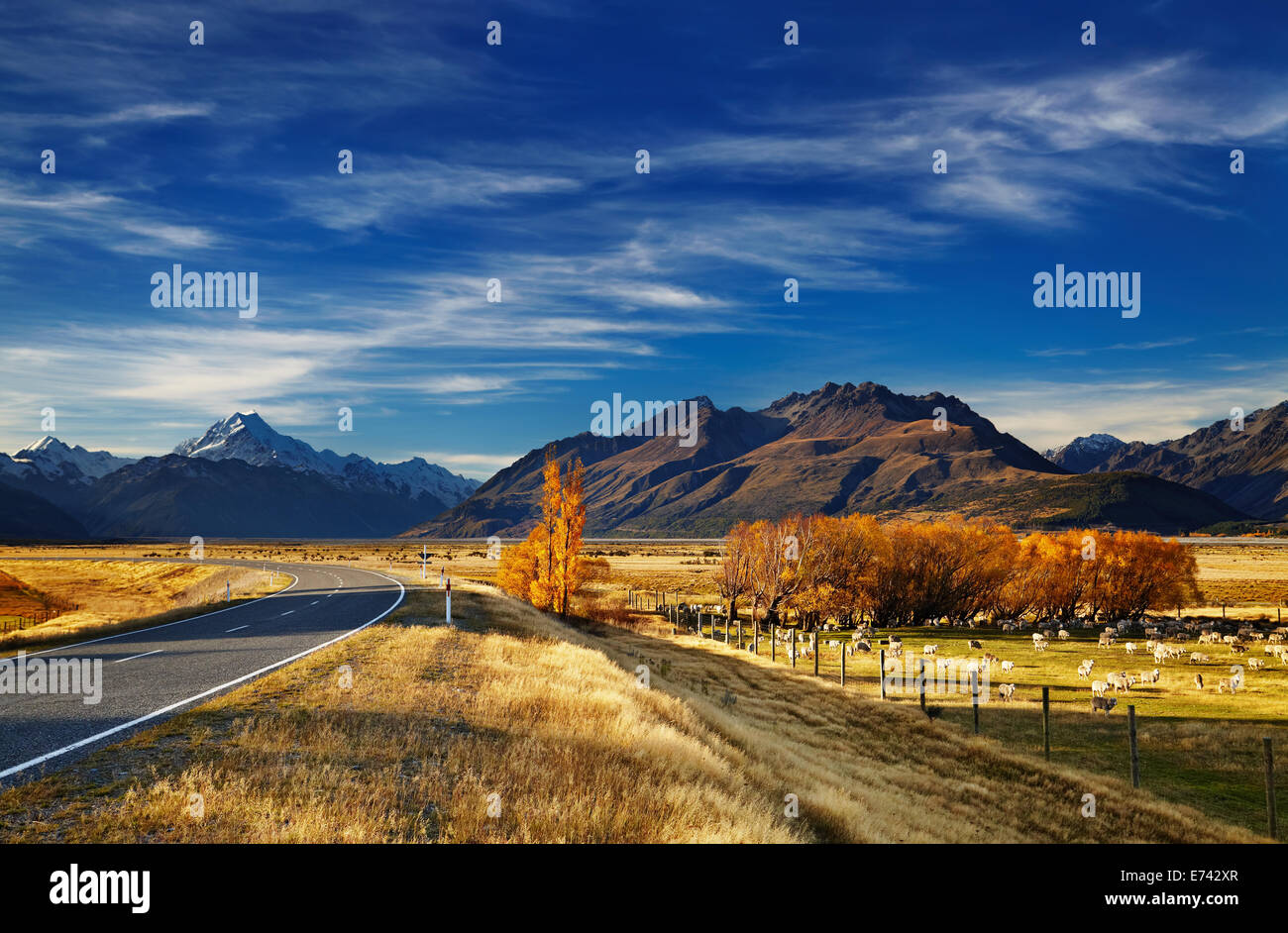 Farmland with grazing sheep and Mount Cook on background, Canterbury, New Zealand - Stock Image