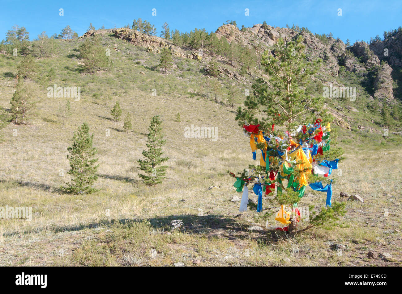 The tree of wishes. Merkit tract, Buryatia, Siberia, Russian Federation - Stock Image