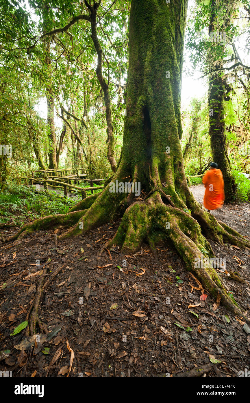 Buddhist monk in misty tropical rain forest. Sun beams shining through trees at jungle landscape. Travel background Stock Photo