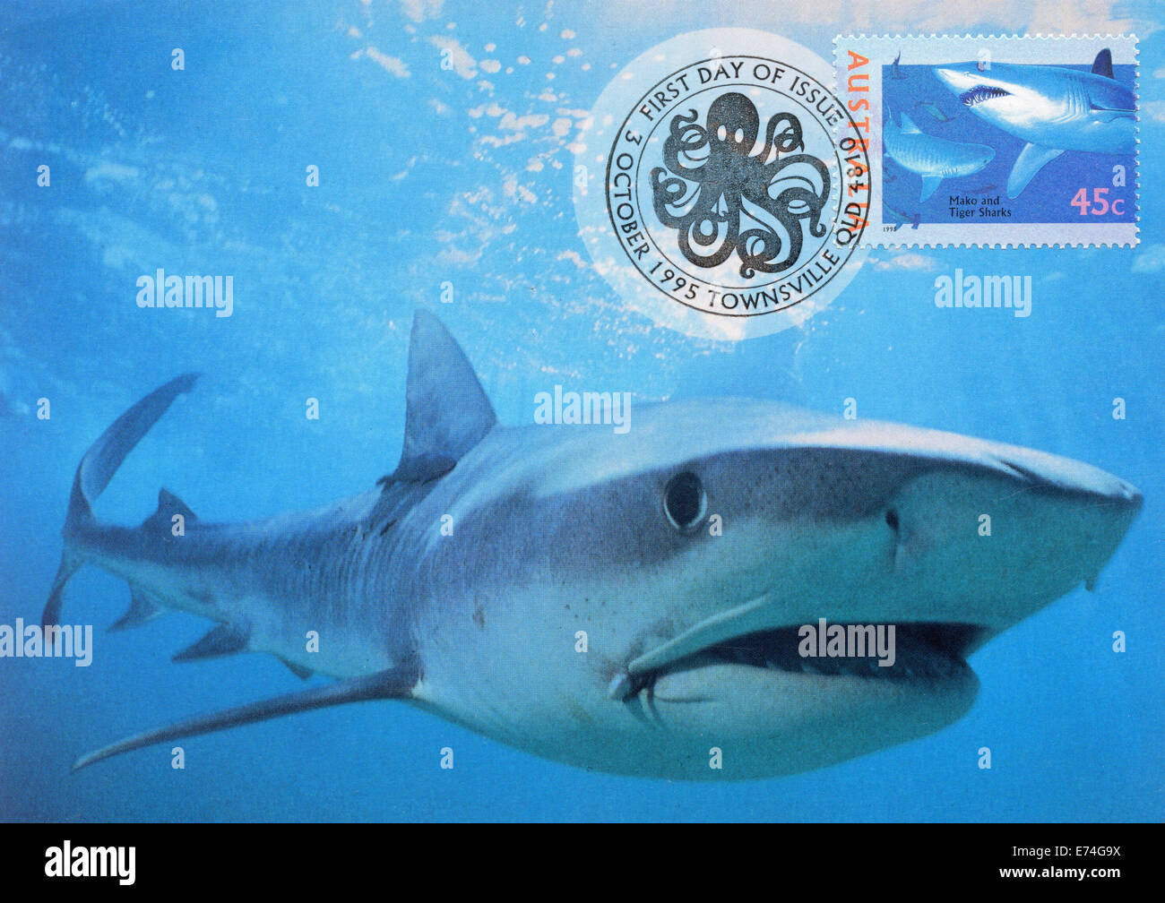 Australia Maximum card with shark - Stock Image