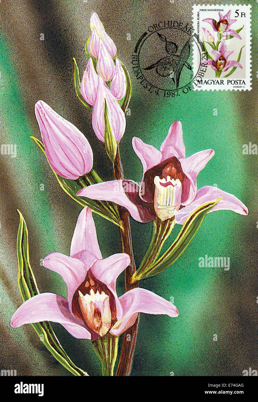Hungary Maximum card with orchids - Stock Image