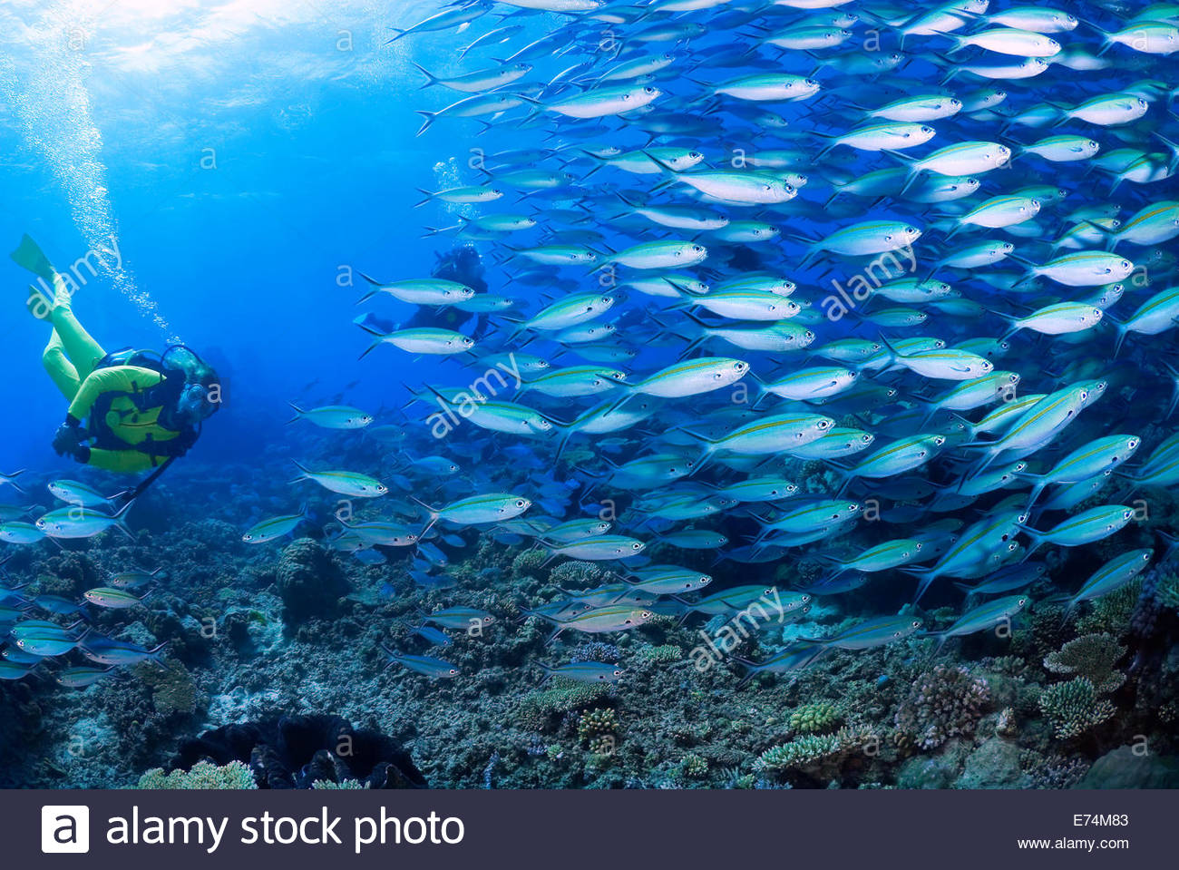 Scuba diving with school of fish Stock Photo