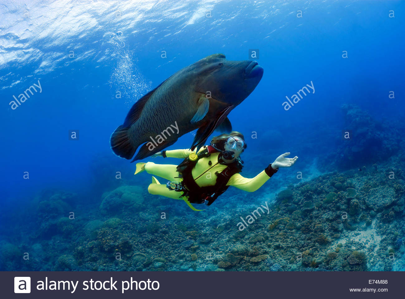 Scuba diving with fish Stock Photo