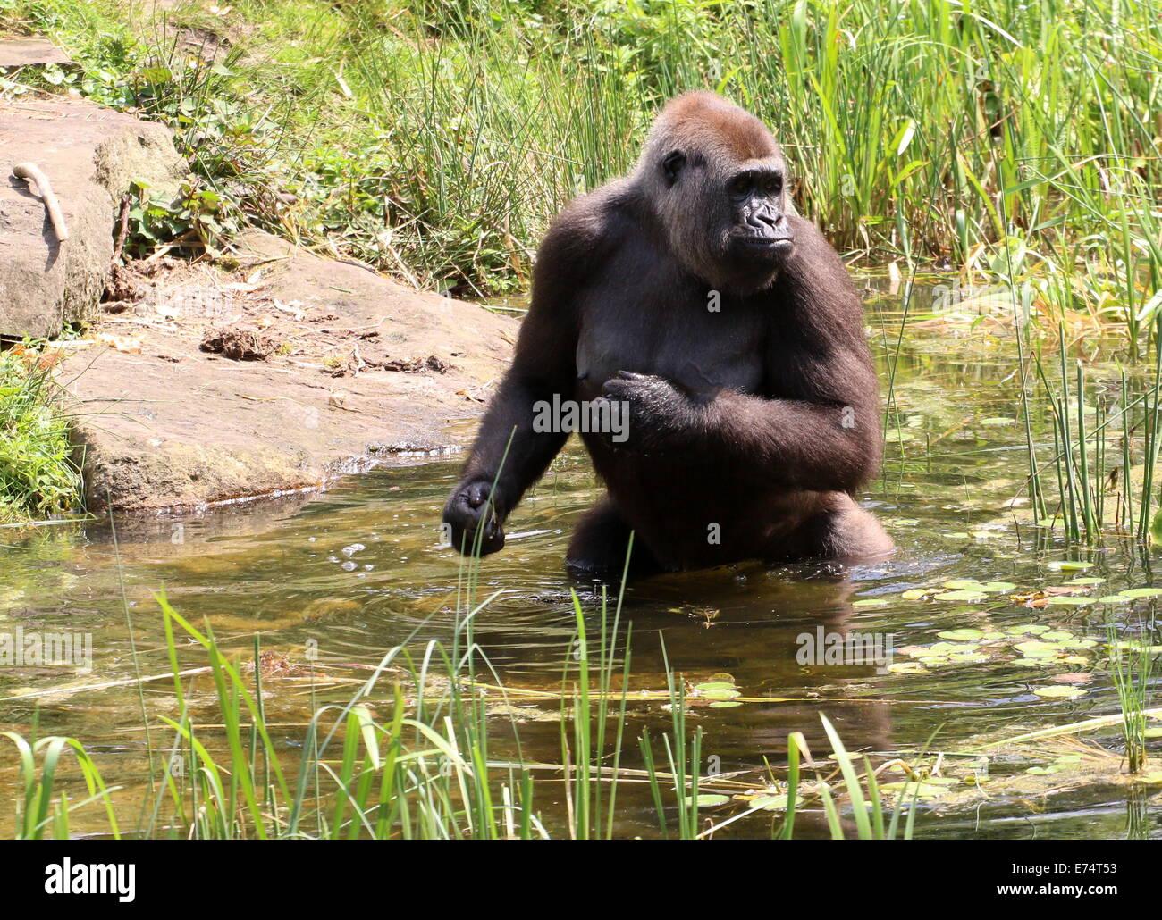 zoo apenheul