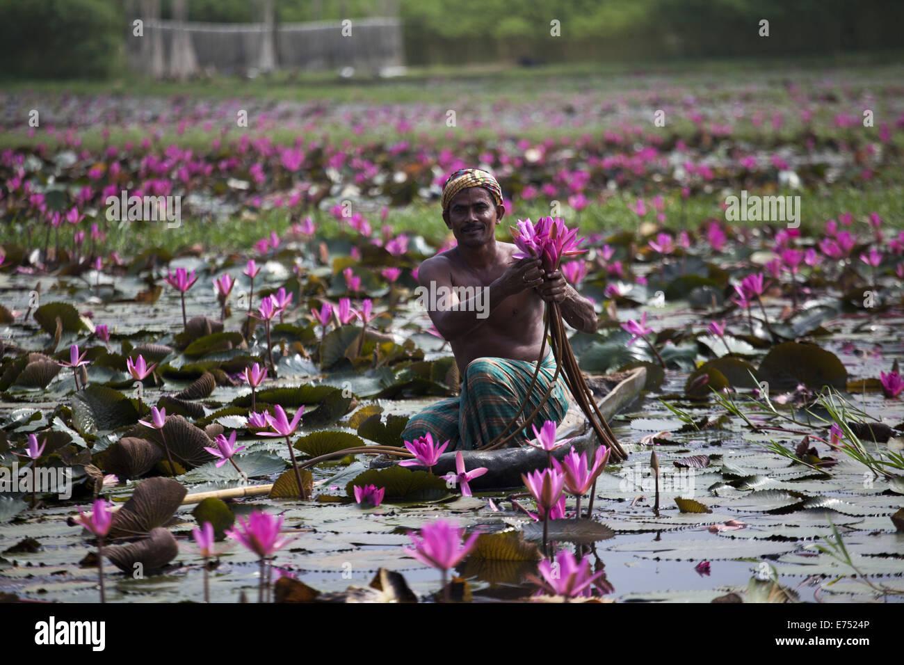 Girl selling water lilies market stock photos girl selling water 7th sep 2013 water lily the national flower of izmirmasajfo