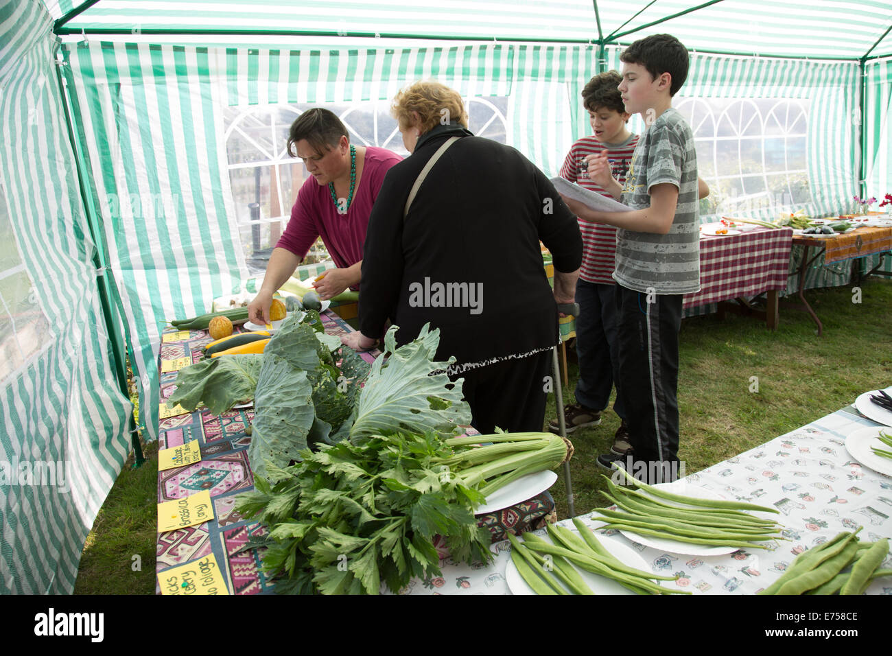 Allotment in South London - Stock Image
